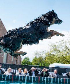300-conzentrat-duesseldorf-dogdiving-tiershooting-hund-und-katz