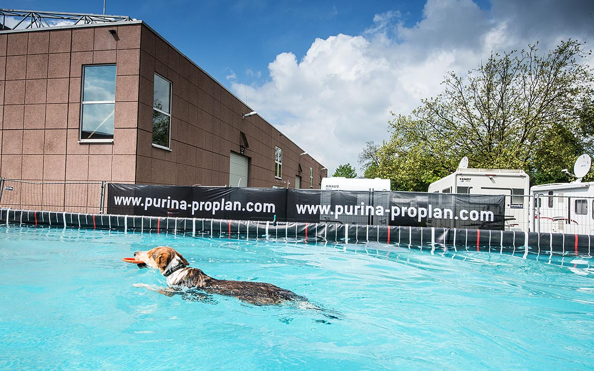 301-conzentrat-duesseldorf-fotoshooting-dog-diving-big-air-fuer-purina-pro-plan