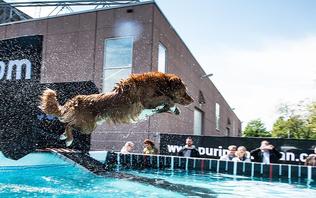 302-conzentrat-duesseldorf-hunde-shooting--dog-diving-big-air-nestle-purina-pro-plan