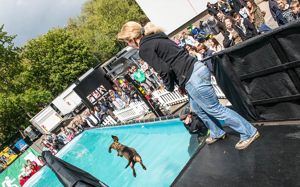 305-conzentrat-duesseldorf-oneofthebest-dog-diving-foto-dokumentation-purina-pro-plan